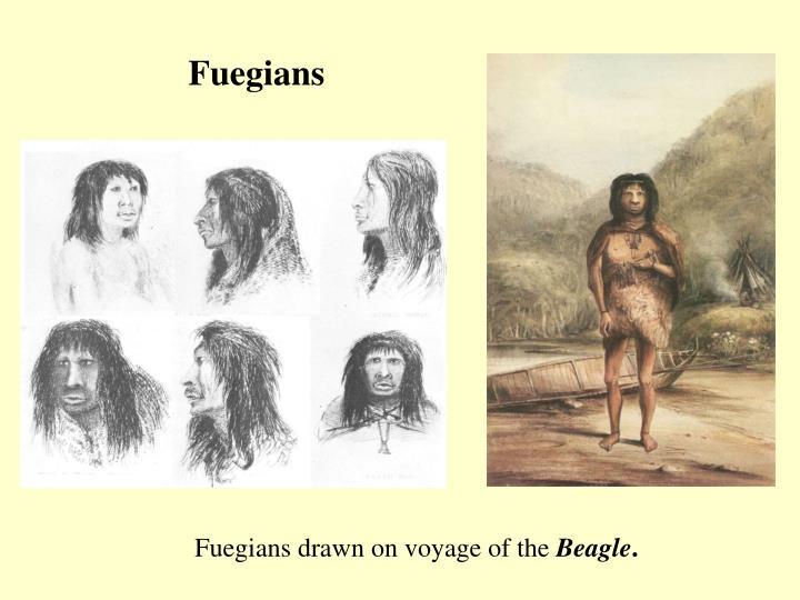 Fuegians