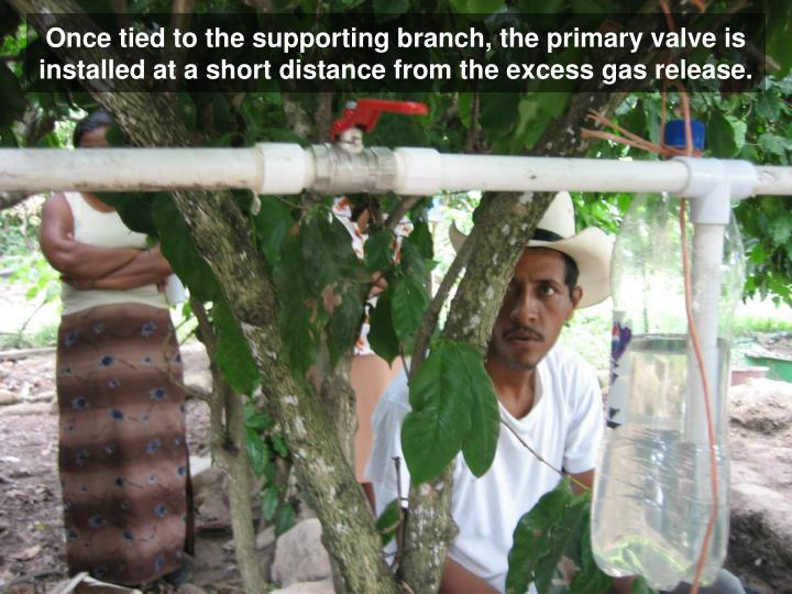 Once tied to the supporting branch, the primary valve is installed at a short distance from the excess gas release.