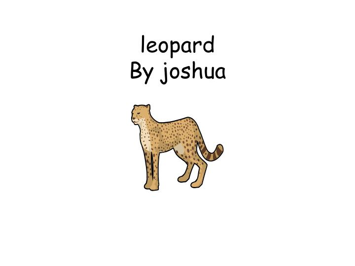 Leopard by joshua