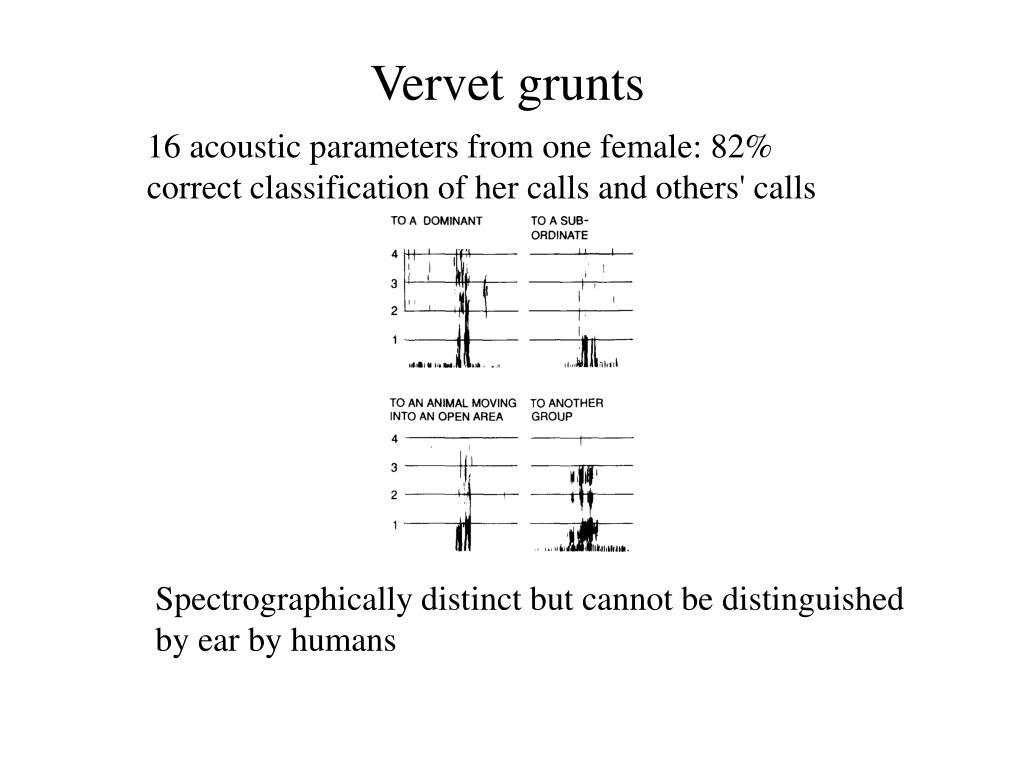 Vervet grunts