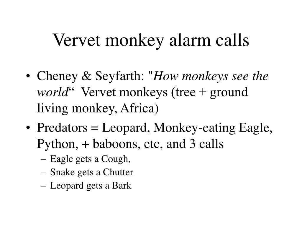 Vervet monkey alarm calls