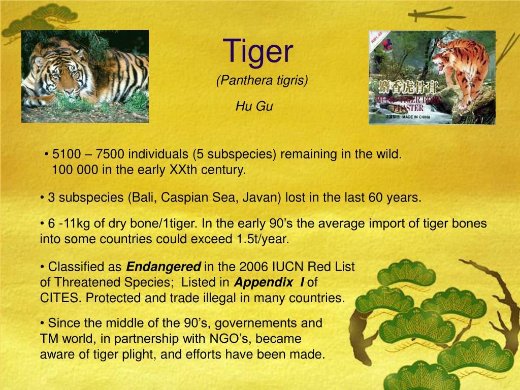(Panthera tigris)