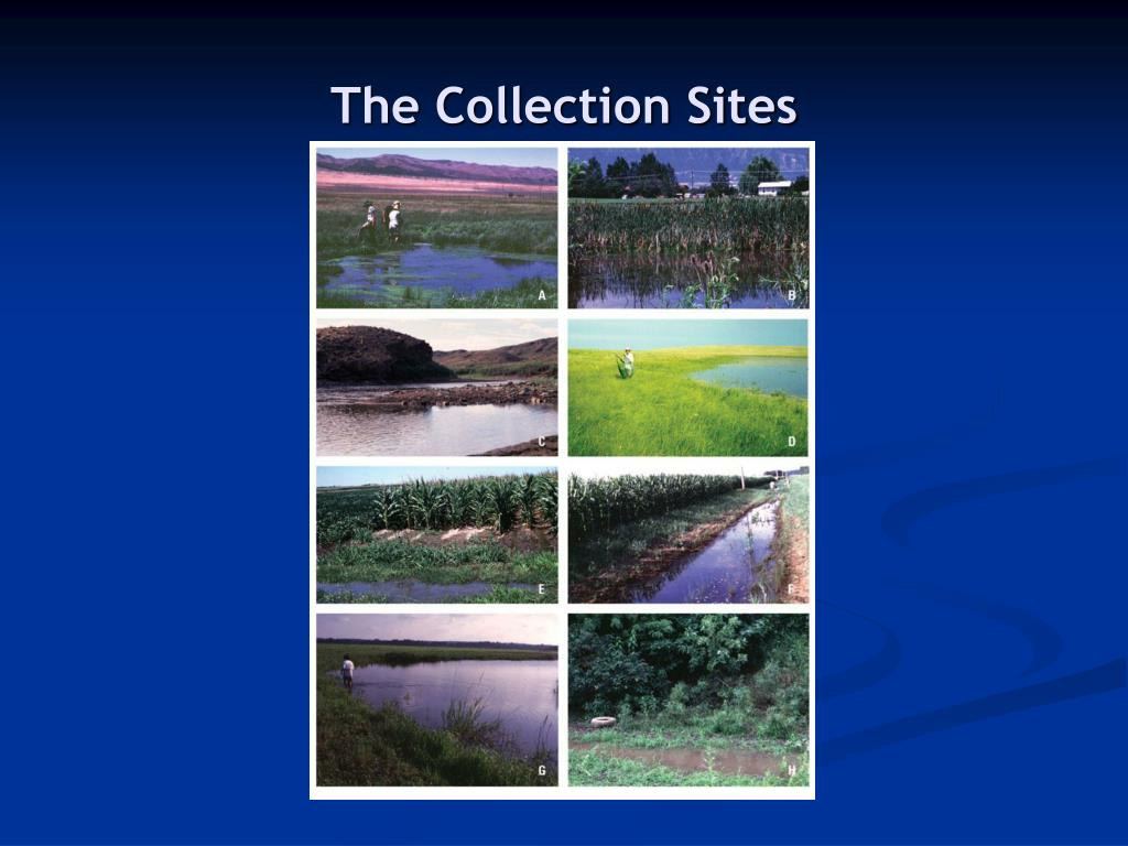 The Collection Sites