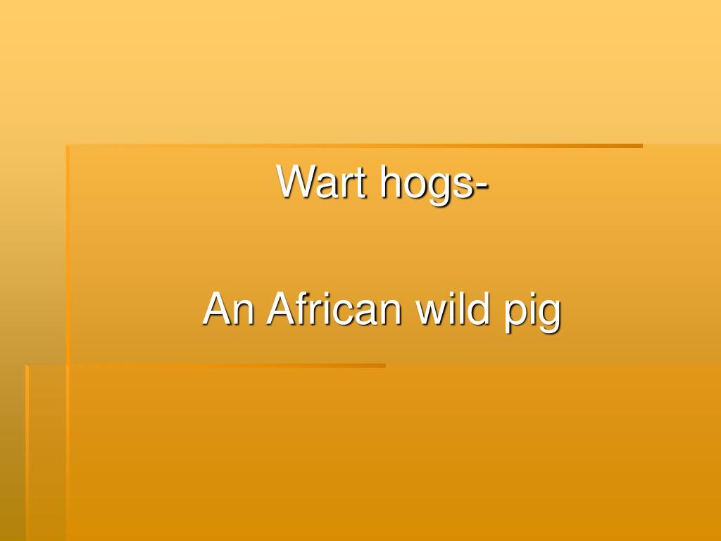 Wart hogs-