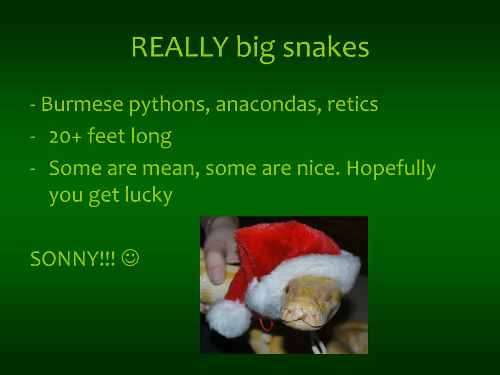 REALLY big snakes