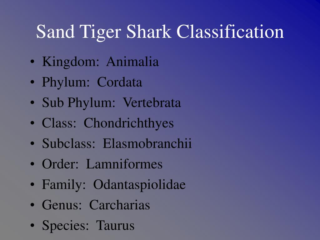 Sand Tiger Shark Classification