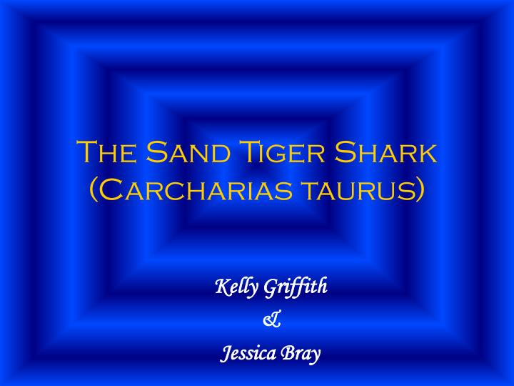 The sand tiger shark carcharias taurus l.jpg