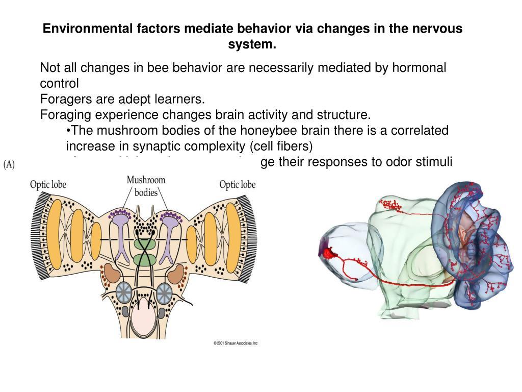 Environmental factors mediate behavior via changes in the nervous system.