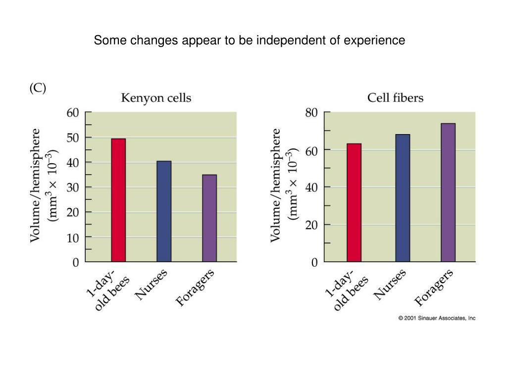 Some changes appear to be independent of experience