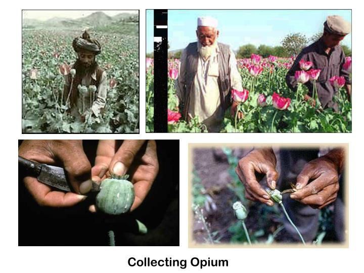 Collecting Opium