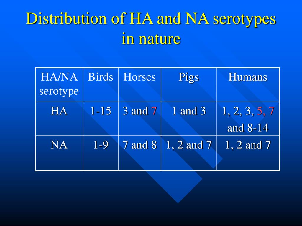 Distribution of HA and NA serotypes in nature