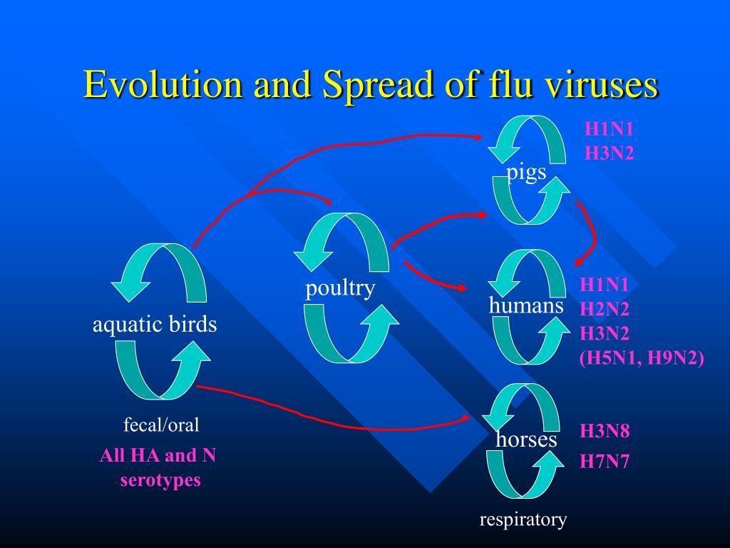 Evolution and Spread of flu viruses