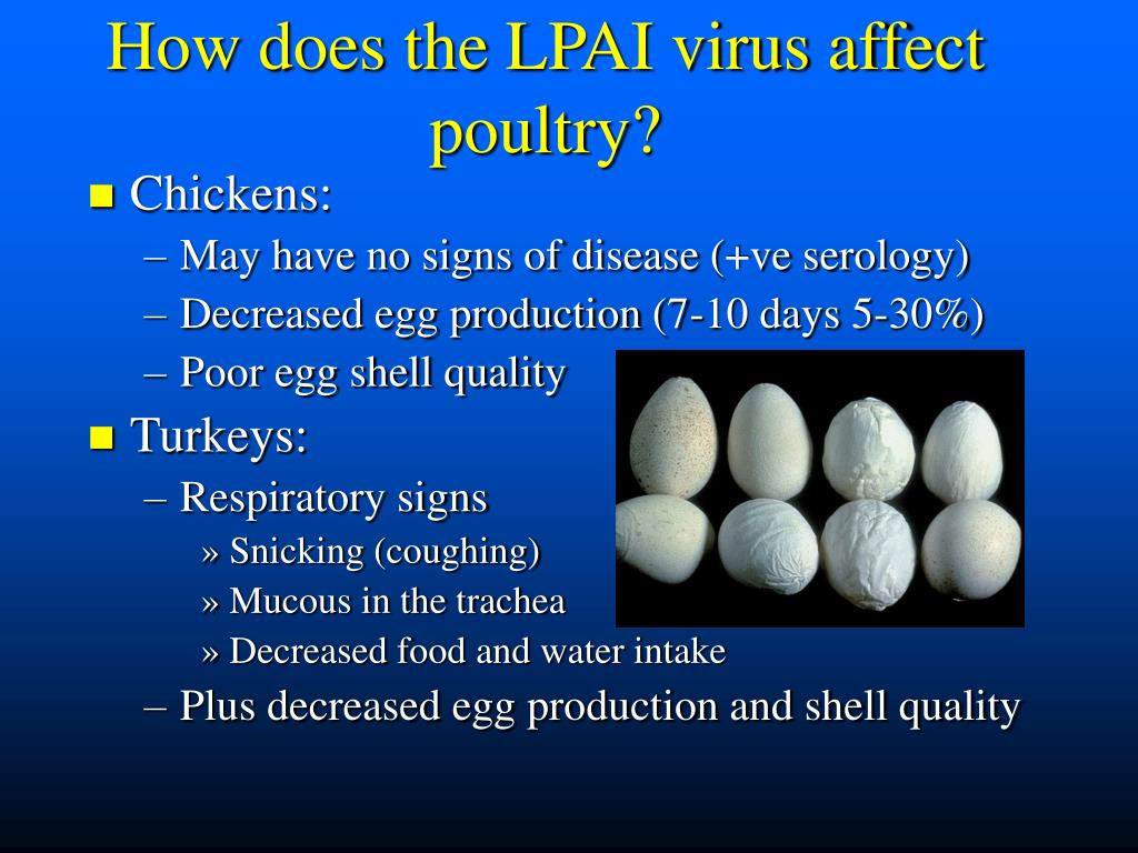 How does the LPAI virus affect poultry?