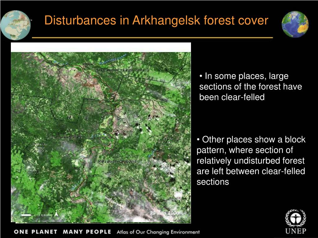 Disturbances in Arkhangelsk forest cover