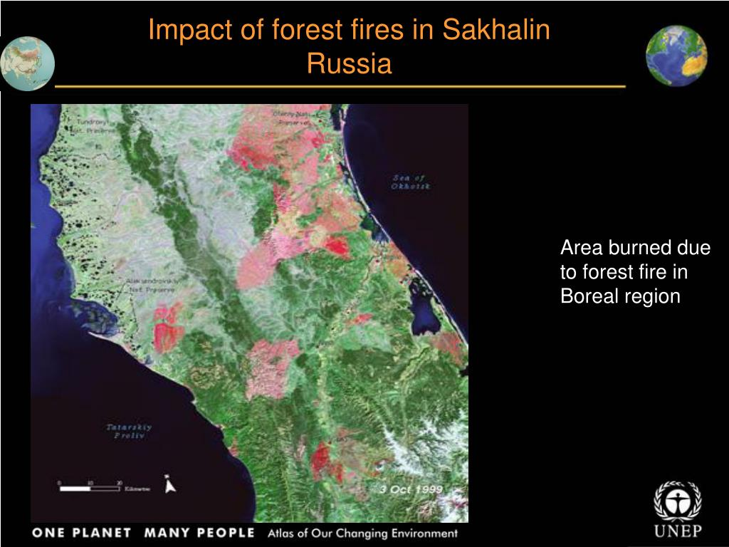 Impact of forest fires in Sakhalin Russia