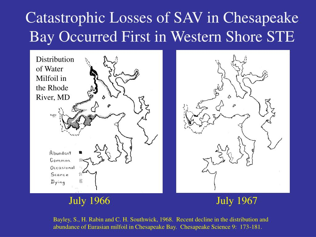 Catastrophic Losses of SAV in Chesapeake Bay Occurred First in Western Shore STE