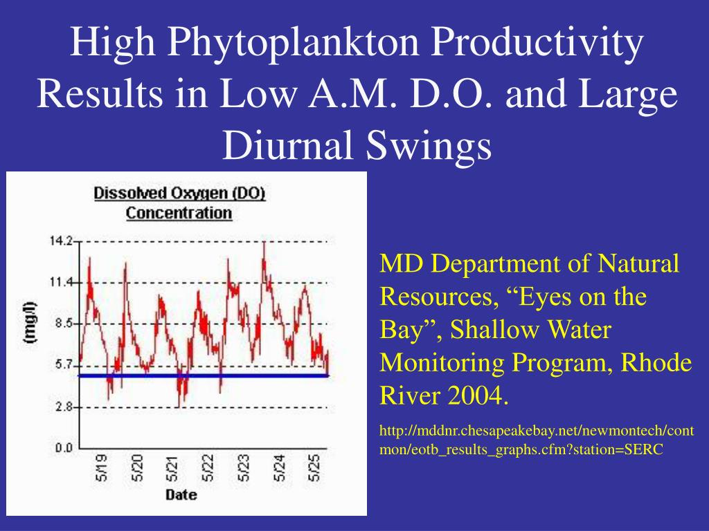 High Phytoplankton Productivity Results in Low A.M. D.O. and Large Diurnal Swings