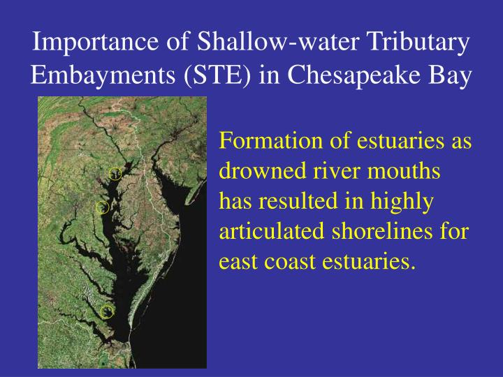 Importance of shallow water tributary embayments ste in chesapeake bay