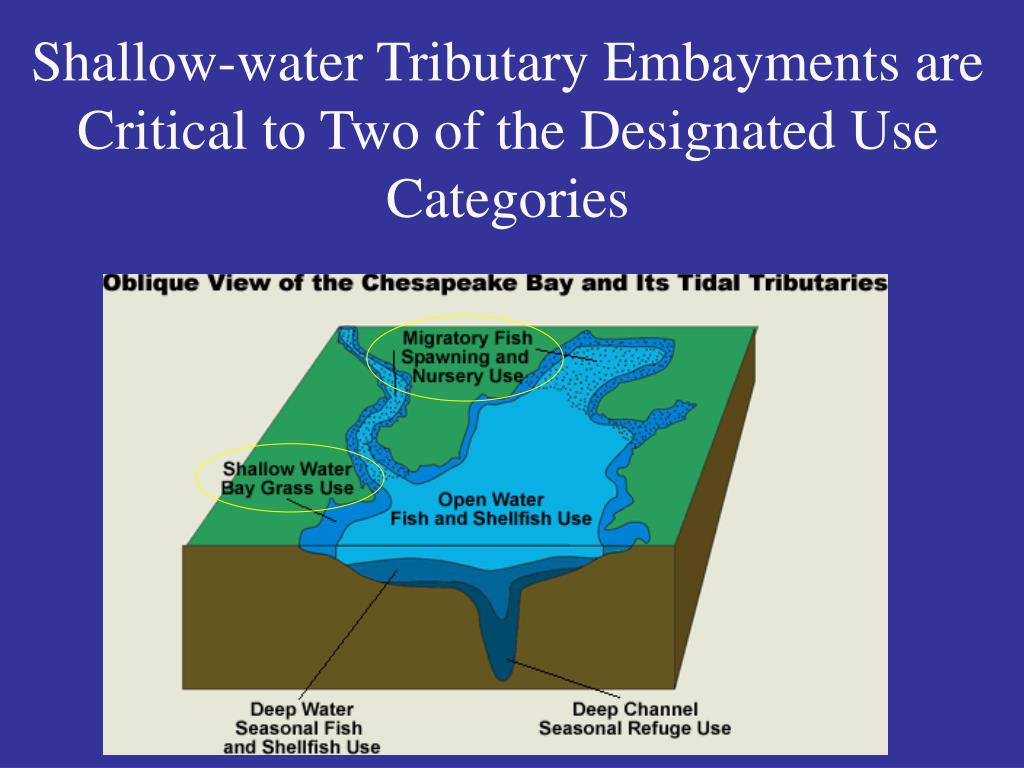Shallow-water Tributary Embayments are Critical to Two of the Designated Use Categories