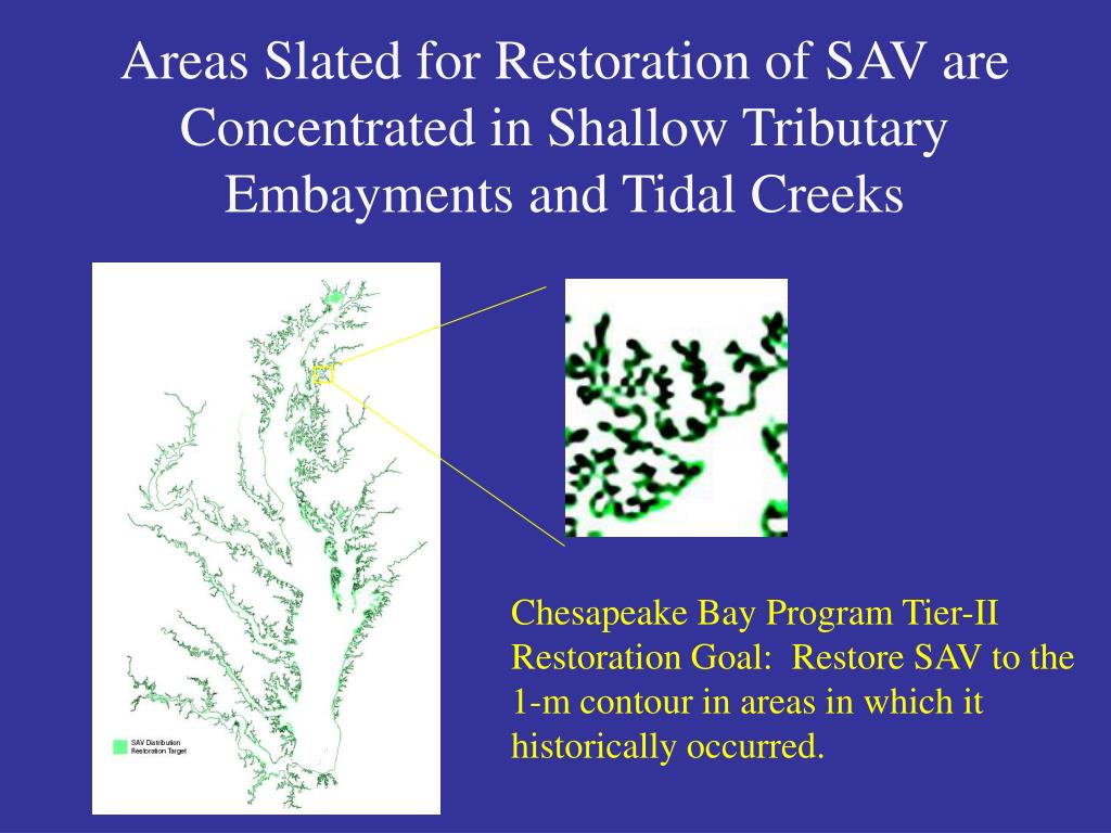 Areas Slated for Restoration of SAV are Concentrated in Shallow Tributary Embayments and Tidal Creeks