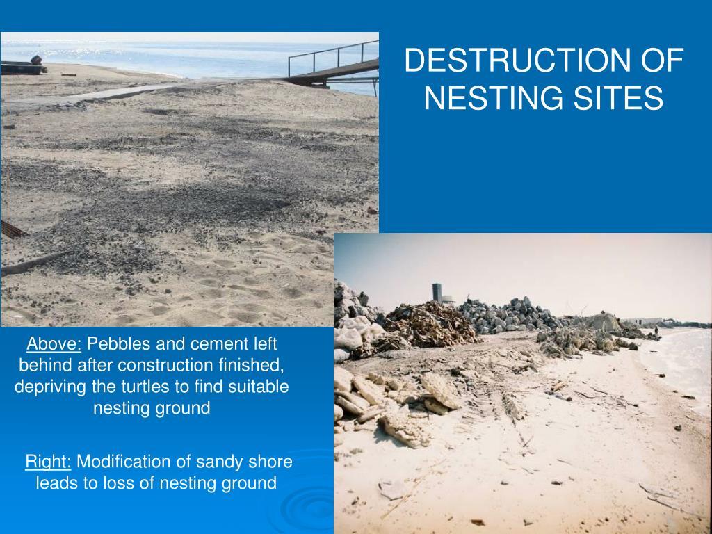DESTRUCTION OF NESTING SITES