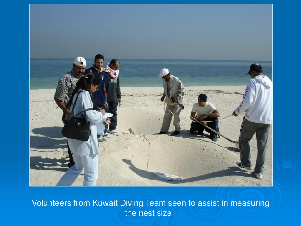Volunteers from Kuwait Diving Team seen to assist in measuring the nest size