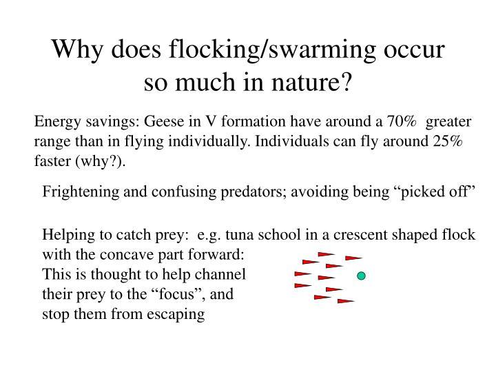 Helping to catch prey:  e.g. tuna school in a crescent shaped flock