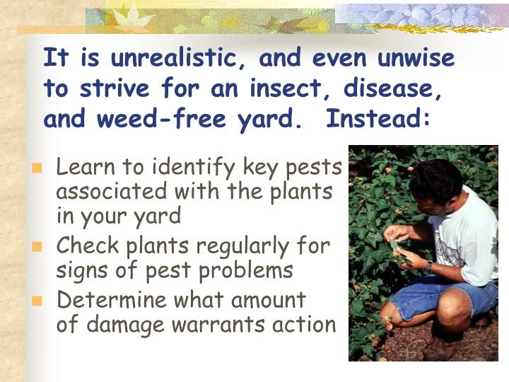 It is unrealistic, and even unwise to strive for an insect, disease, and weed-free yard.  Instead: