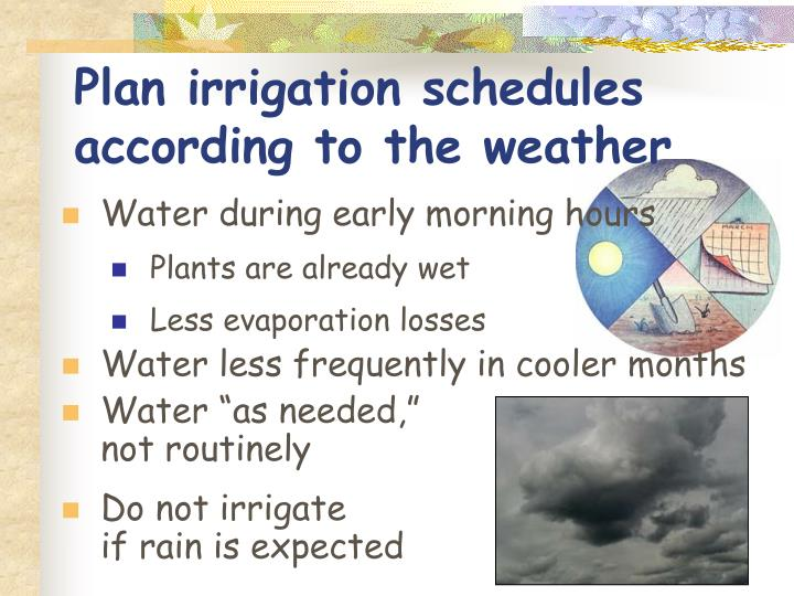 Plan irrigation schedules according to the weather
