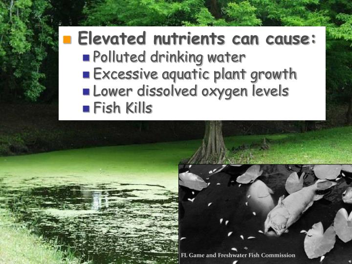 Elevated nutrients can cause