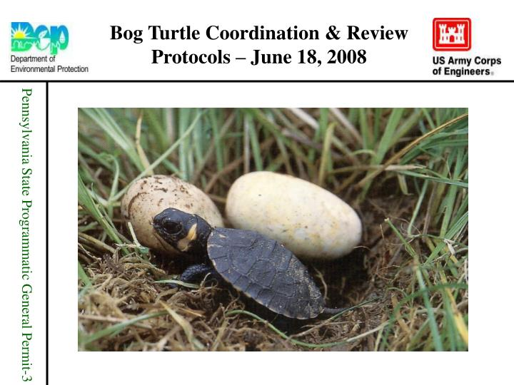 Bog turtle coordination review protocols june 18 2008