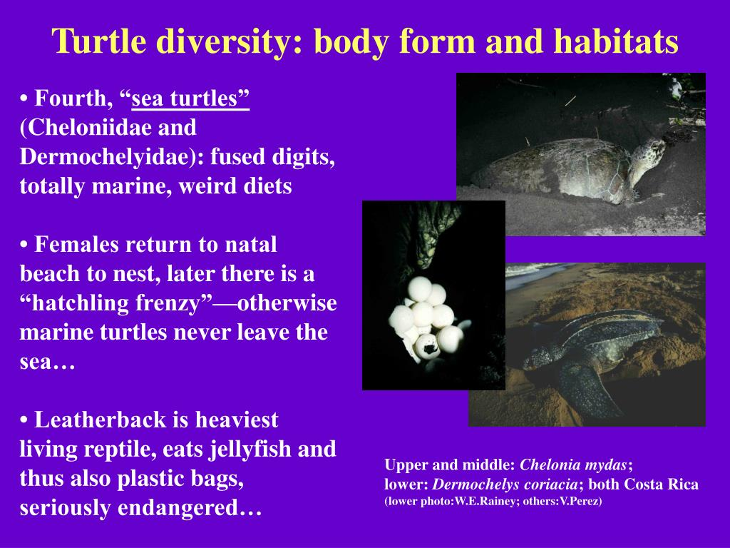 Turtle diversity: body form and habitats