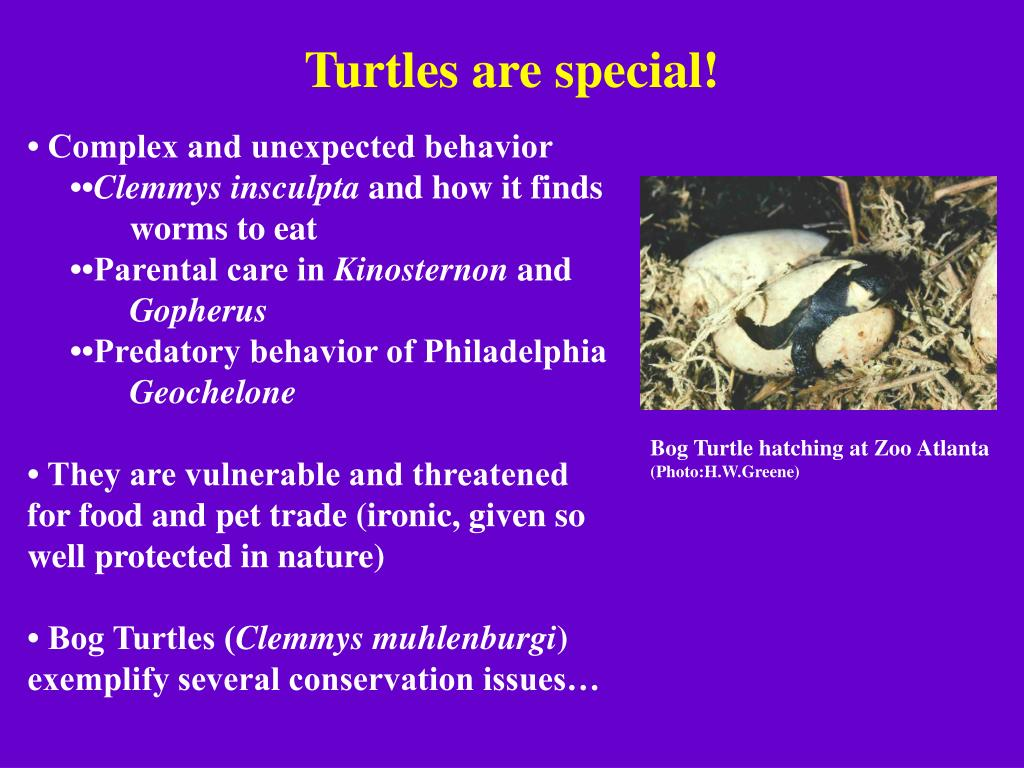 Turtles are special!