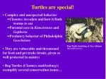 turtles are special