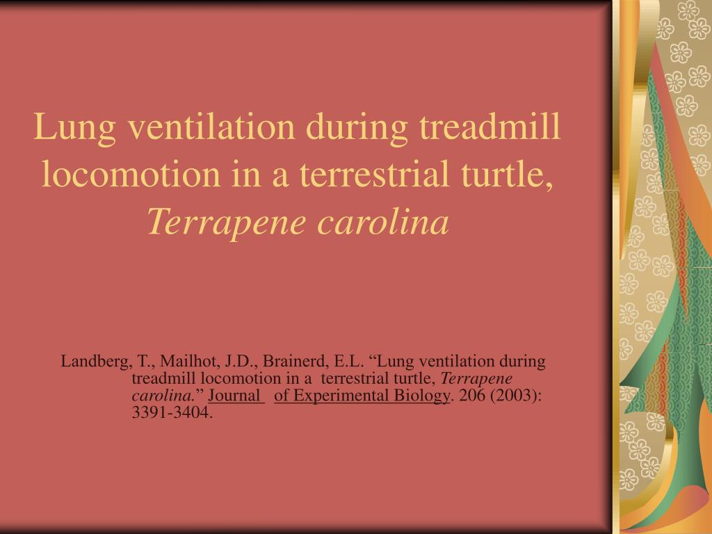Lung ventilation during treadmill locomotion in a terrestrial turtle,