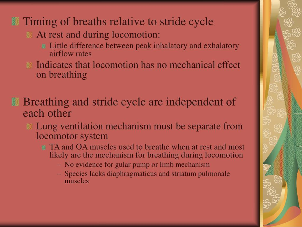 Timing of breaths relative to stride cycle