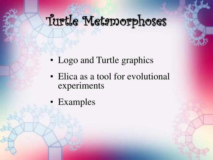 Turtle metamorphoses2