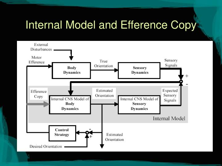 Internal Model and Efference Copy