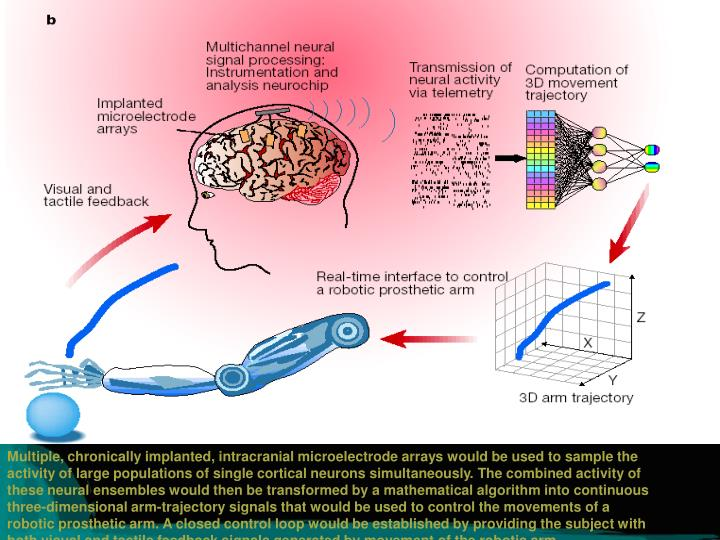 Multiple, chronically implanted, intracranial microelectrode arrays would be used to sample the