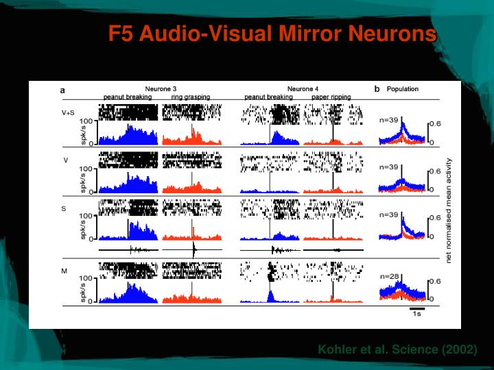 F5 Audio-Visual Mirror Neurons