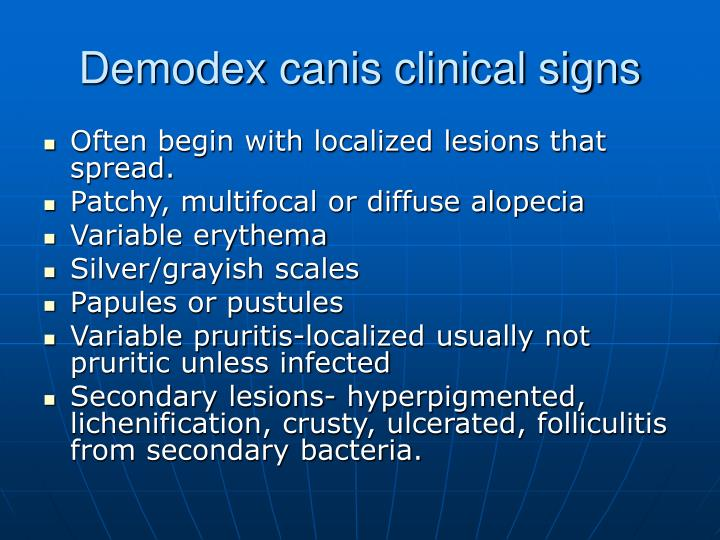 Demodex canis clinical signs
