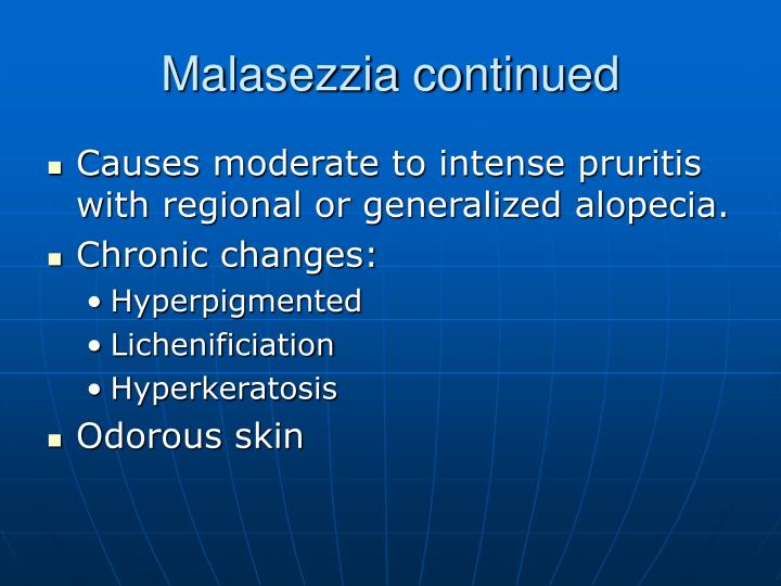 Malasezzia continued