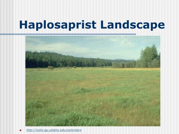 Haplosaprist Landscape
