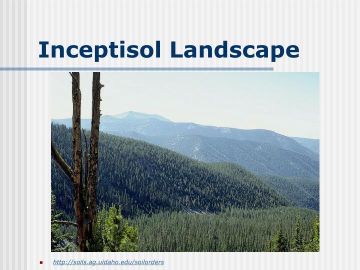 Inceptisol Landscape