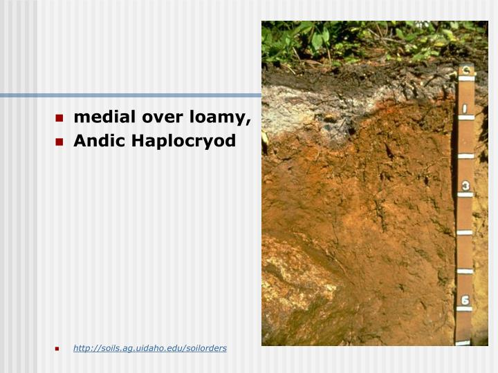 medial over loamy,