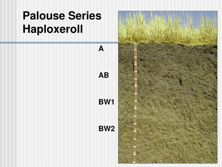 Palouse Series