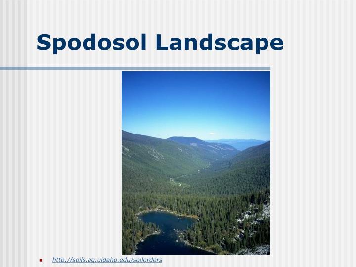 Spodosol Landscape