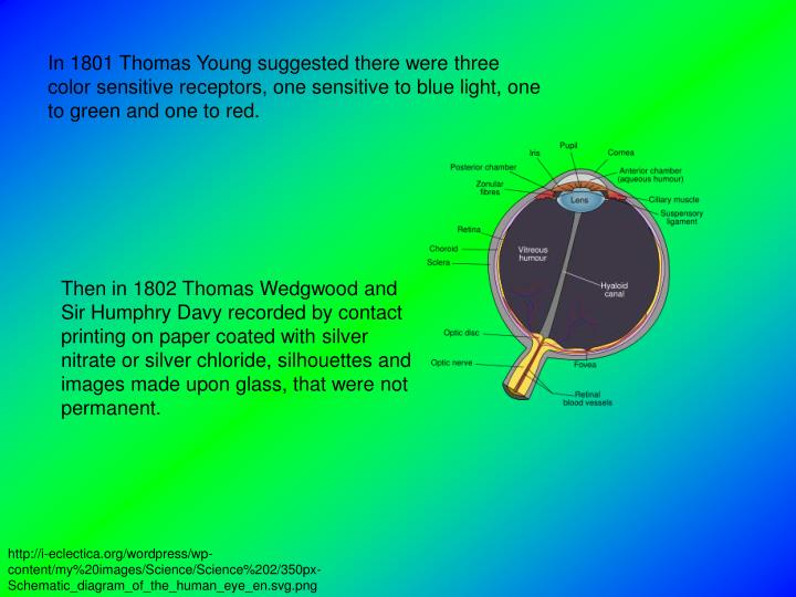 In 1801 Thomas Young suggested there were three color sensitive receptors, one sensitive to blue lig...