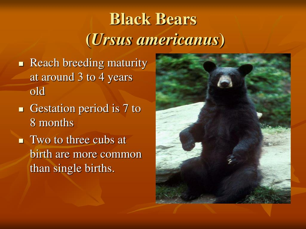 Reach breeding maturity at around 3 to 4 years old