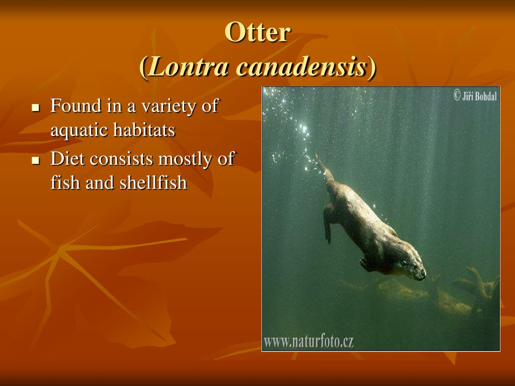 Found in a variety of aquatic habitats
